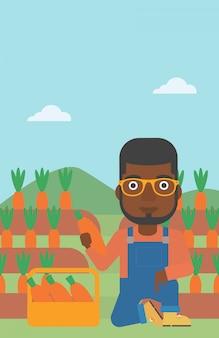 Agriculteur ramassant des carottes