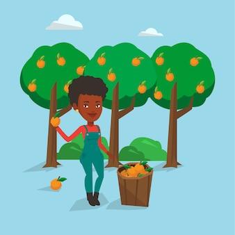 Agriculteur ramassant des oranges