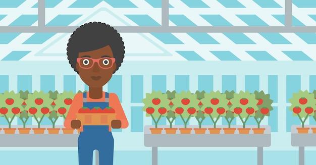 Agriculteur ramassant des tomates