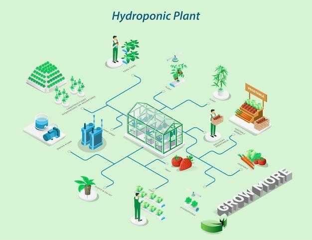 Les agriculteurs cultivent des légumes hydroponiques et vendent