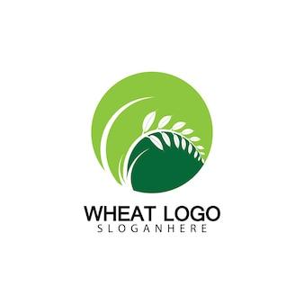 Agriculture blé logo template vecteur icône design