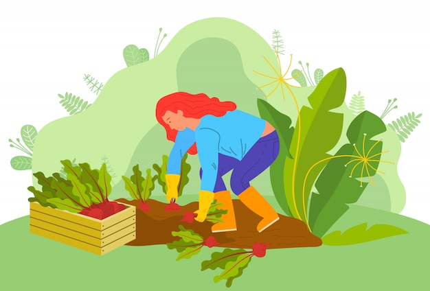 Agriculture femme avec betteraves agriculteur à la ferme