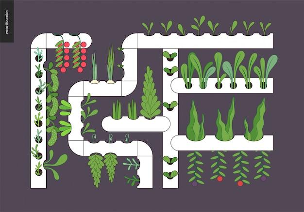 Agriculture et jardinage urbains - culture hydroponique