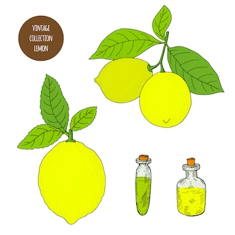 Agrumes. citron. ensemble dessiné à la main de vecteur de plantes cosmétiques isolé