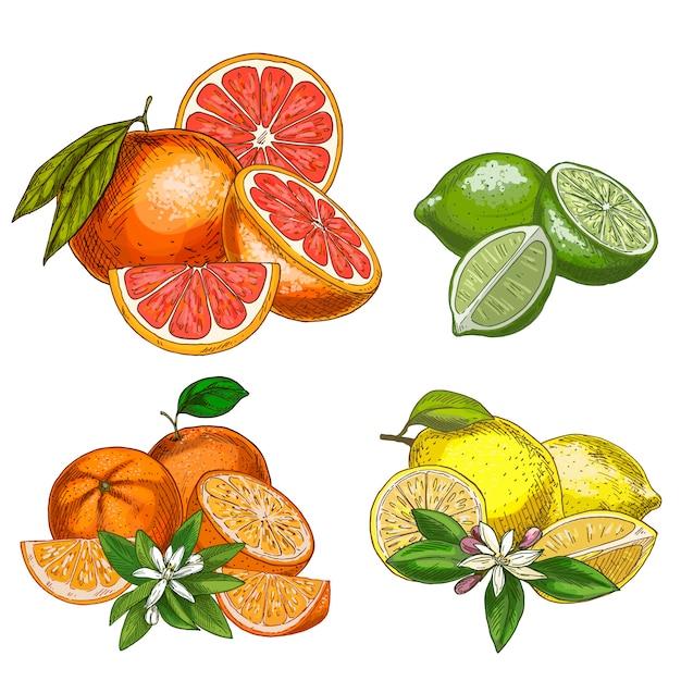 Agrumes avec moitiés et fleurs. citron, citron vert, pamplemousse, orange.