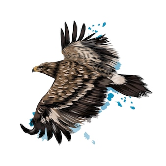Aigle des steppes volant d'une éclaboussure d'aquarelle, dessin coloré, réaliste.
