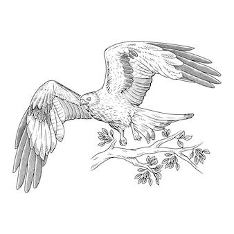 Aigle volant dessiné à la main