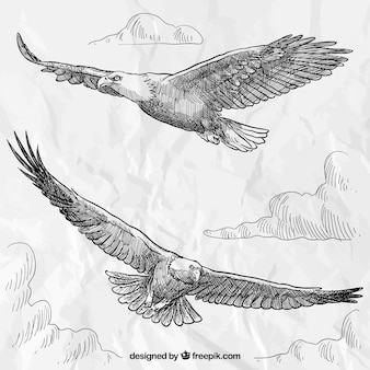 Aigles dessinés à la main