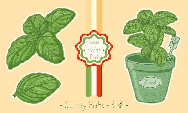 Aliments et herbes culinaires au basilic