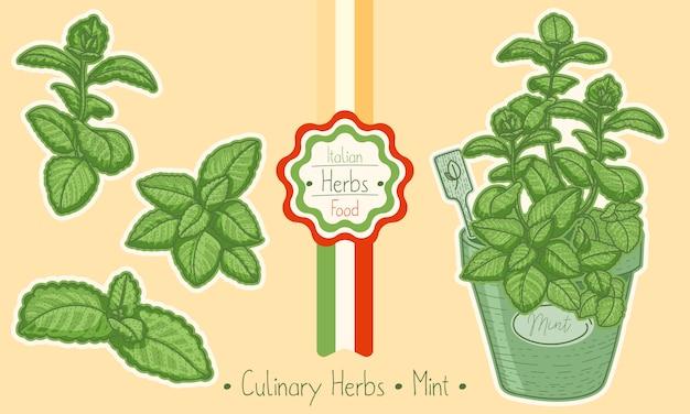 Aliments et herbes culinaires menthe