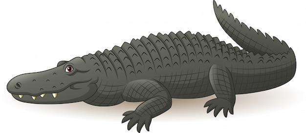 Alligator gris de dessin animé isolé sur blanc