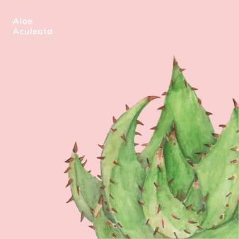 Aloe aculeata plante dessiné à la main