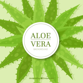 Aloe vera background décoratif