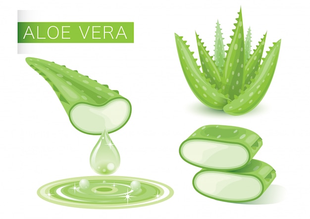 Aloe vera vert frais