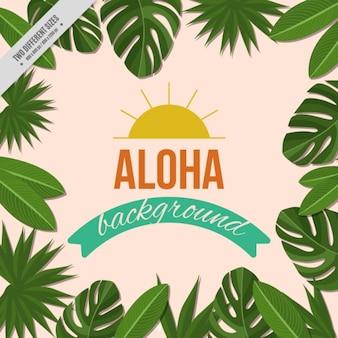 Aloha fond avec cadre floral