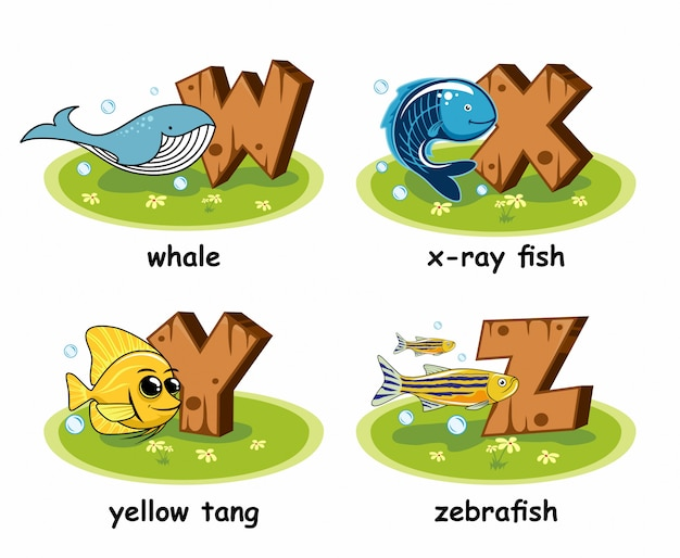 Alphabet en bois de poisson-zèbre tang tang poisson-zèbre aux rayons x