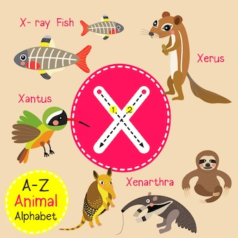 Alphabet de zoo de la lettre x