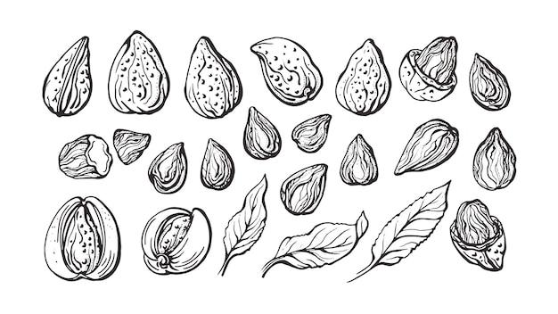 Amande. ensemble de botanique de fruits naturels, feuilles, noix