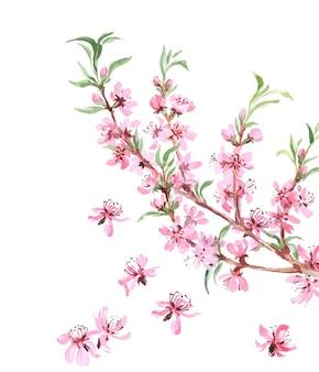 Amandiers arbre fleurs roses gros plan avec branche isolé sur fond blanc. illustration vectorielle.