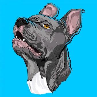 Amoureux des chiens pitbull