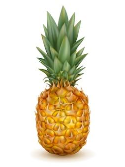 Ananas réaliste isolé