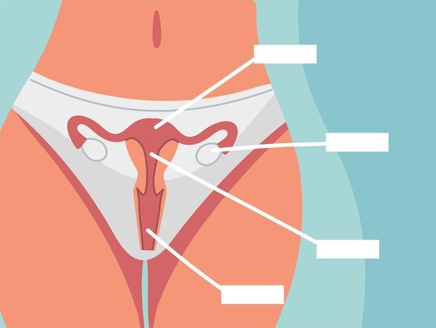 Anatomie du corps système reproducteur féminin