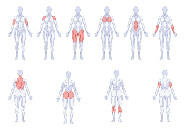 Anatomie féminine