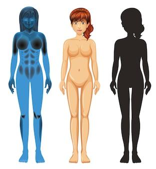 Anatomie humaine féminine sur blanc