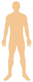 Anatomie humaine sur fond blanc