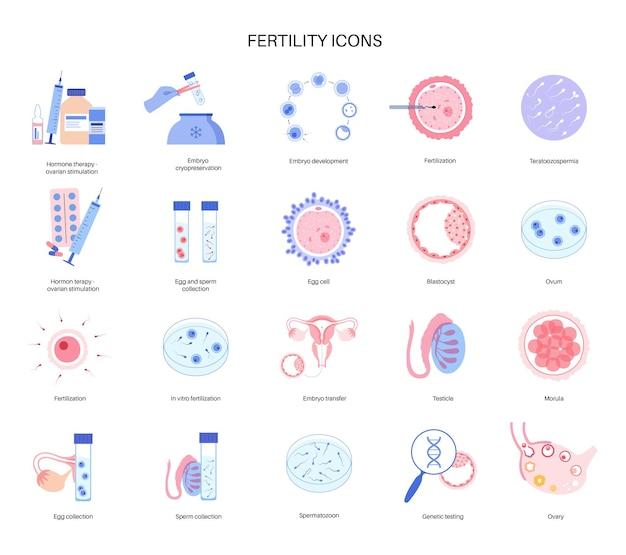 Anatomie des ovules humains. fertilisation, gynécologie et recherche sur la fiv.