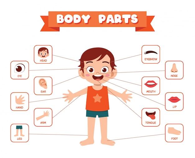 Anatomie de la partie du corps de l'enfant mignon garçon heureux