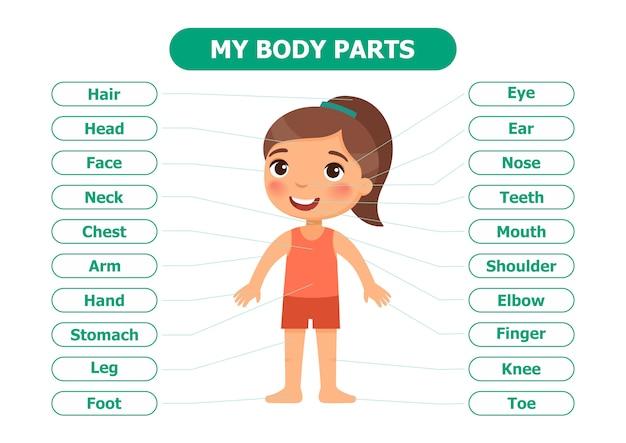 Anatomie pour les enfants.