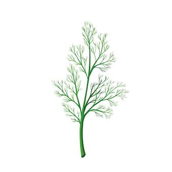 Aneth vert, nourriture végétarienne, menu sain. épices d'herbes, salade et repas. illustration vectorielle isolée en style cartoon.