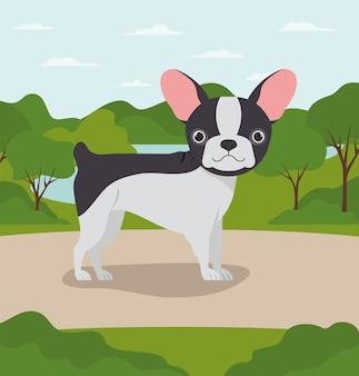 Animal de compagnie bulldog français mignon dans le camp
