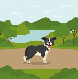 Animal de compagnie mignon chien border collie dans le camp