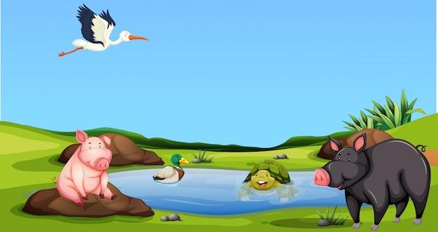 Animal à l'étang