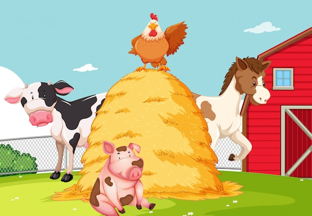Animal à la ferme