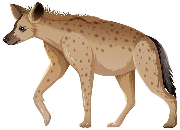 Animal hyène sur fond blanc