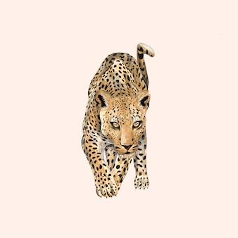 Animal léopard