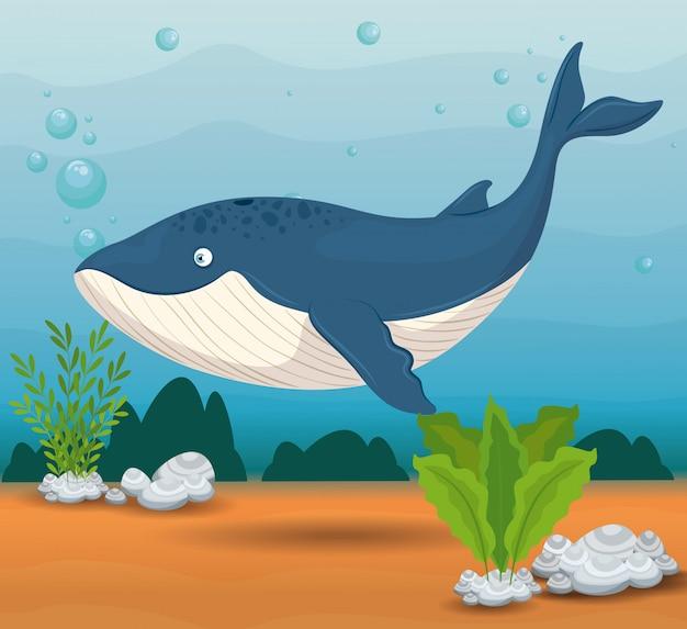 Animal marin baleine bleue dans l'océan, habitant du monde marin, créature sous-marine mignonne, habitat marin, faune sous-marine du tropique