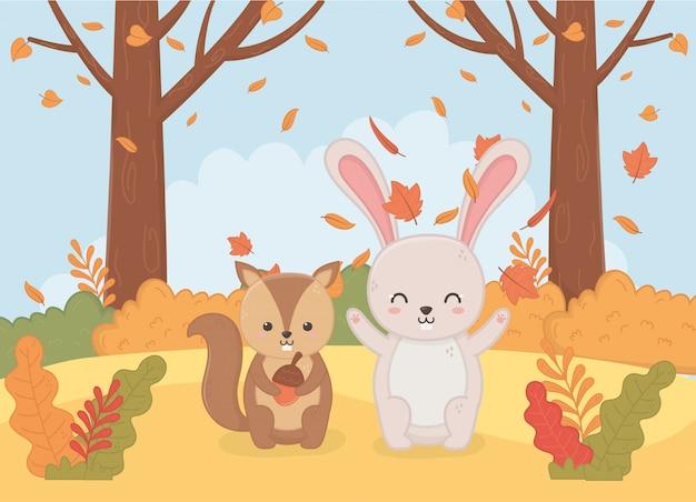 Animal mignon en automne