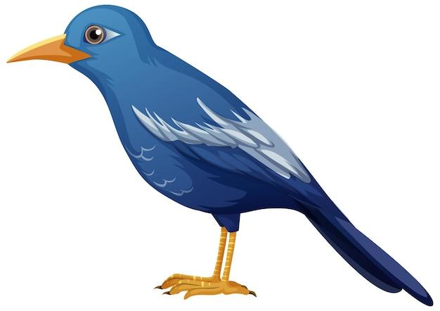 Animal oiseau bleu sur fond blanc