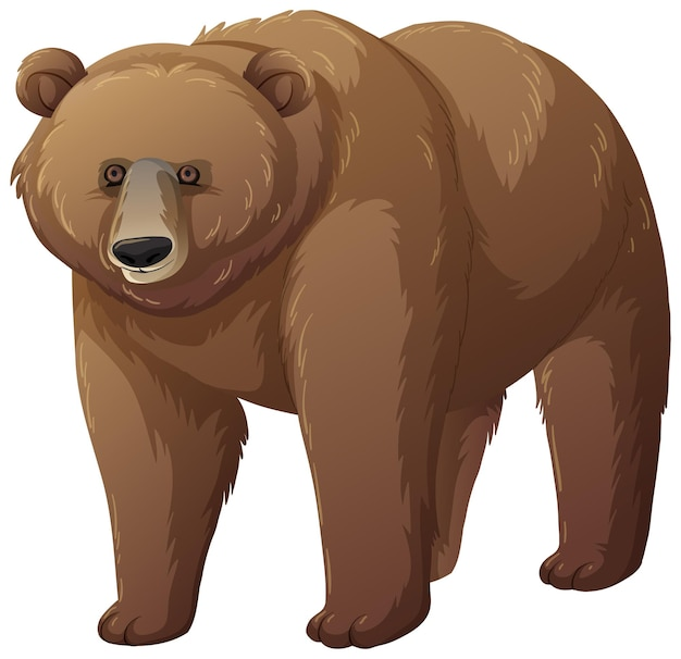 Animal ours grizzli sur fond blanc