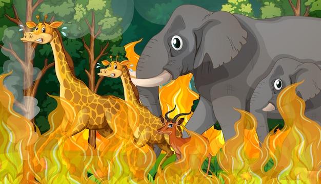 Un animal sauvage fuit un feu de forêt