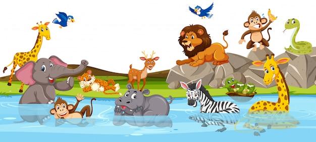 Animal sauvage à la rivière