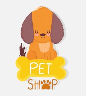 Animalerie, petit chien assis os clinique vétérinaire nourriture