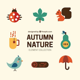 Animaux et accessoires d'automne