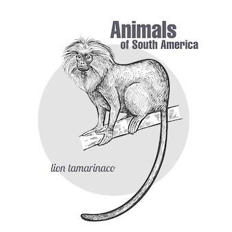 Animaux d'amérique du sud lion tamarin.