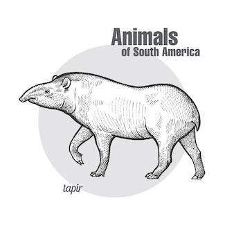 Animaux d'amérique du sud tapir.
