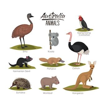 Animaux de l'australie dans une silhouette colorée